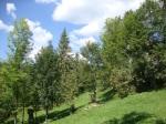 The Carpathians 2