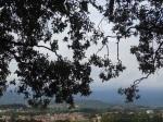 On top of Guinigi Tower