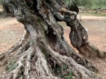 Ancient Trunks 7